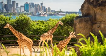 The pathway to challenge refusal of 8503 – Australia Visitor visa waiver