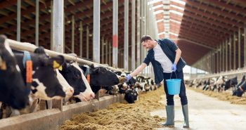 New Farm Worker Visa announced by Australian Agriculture Minister
